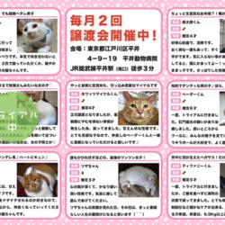 江戸川区多頭飼育崩壊した猫たちの譲渡会 サムネイル3