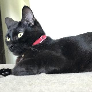 黒猫 甘えた黒猫ちゃん