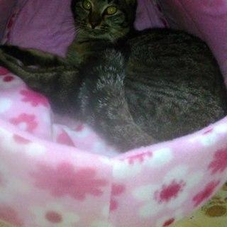 保護猫(7ヶ月位)もらってください❗
