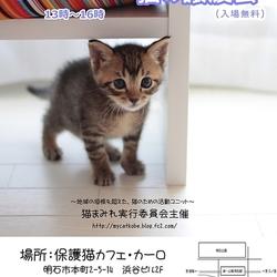 明石【譲渡会】猫まみれwithカーロ