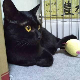 人懐こい黒猫です(^^)