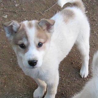 人が大好きな甘えん坊のオス子犬です。