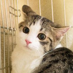 2月3日(土)三好ネコの会「猫の譲渡会」・愛知県みよし市