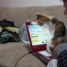 子猫の頃のつぐみ 好奇心いっぱい☆PC画面が気になってついに乗る(その3)