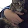 愛くるしい子猫です。(のら猫ちゃん保護中です。)
