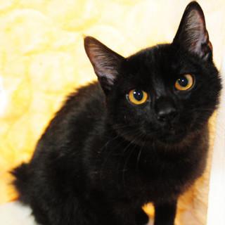 ちょっとだけ怖がり黒猫くん