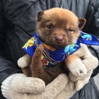 極寒の保健所で固まって頑張っている子犬たち