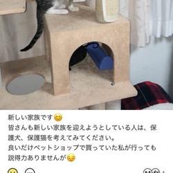 僕は3本足の猫レオ、徳島から愛知に来たよ