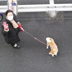 お散歩はママ、お家で一緒はパパ、どっちが好き?