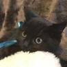海岸の兄弟猫 温和で優しい お兄ちゃん チーノ!