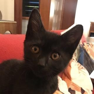 個性が光る♡ツヤツヤスレンダーな黒猫