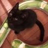 募集停止(トライアル予定)個性が光る♡ツヤツヤ黒猫 サムネイル2