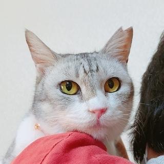 木箱からレスキュー★シニア猫ローラ