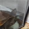 10年飼育はしたニホンイシガメのメスです。