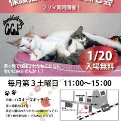 第62回 保護猫たちの幸せ探し会