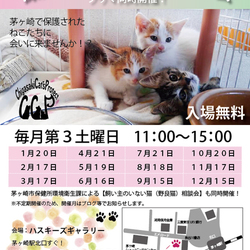 第63回 保護猫たちの幸せ探し会 サムネイル1