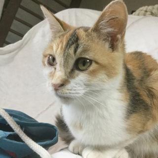 生後4ヵ月くらいの子猫です(仮名:こん)