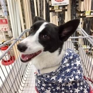 シャイな甘えたさん。小柄でスリムな美犬。