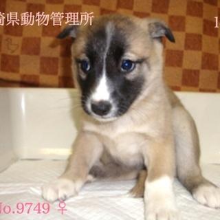 段々慣れてきた野犬が産んだ子犬ちゃん【県外可】