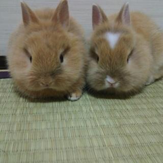 元兎と翔琉の新しい家族になって下さい。