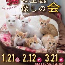 「猫の里親探しの会」1月21日(日)