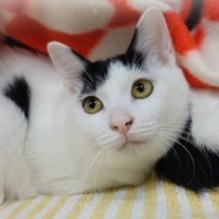 【1/21東日本橋】白黒和猫♡ふぁーちゃん
