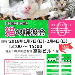 """猫の譲渡会in神戸三宮 """" 猫のミーナ """""""