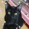 美形の黒猫☆8ヶ月 トド松くん