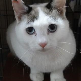 白猫兄妹の新しい家族を募集いたします