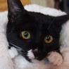可愛い子猫です★保健所出身★猫ちゃん沢山滞在中