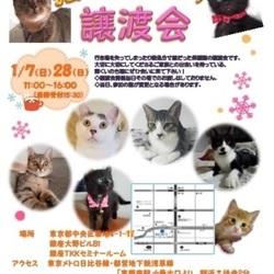 1月28日は東銀座で「猫の未来とびら譲渡会」です♪
