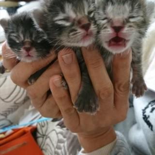 子猫と母猫里親募集中
