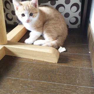 3ヶ月半の子猫
