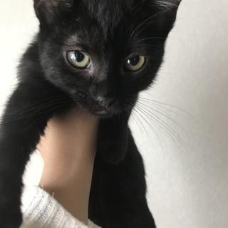 可愛い黒猫さん