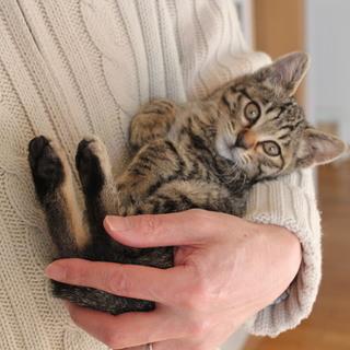 人間も猫も大好き❗元気な女の子です