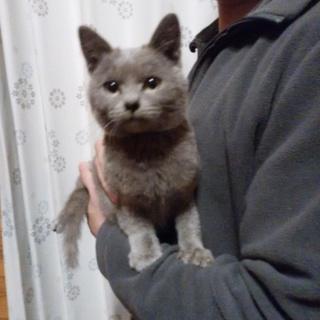 生後約4ヶ月 人懐こい子猫です