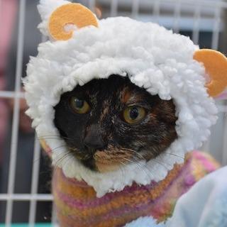 サビ猫 節子ちゃん
