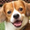 タロ君 愛嬌は家族だけに 家族だけの忠犬になる子