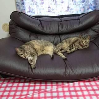 猫大好きな方お願いします