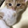 可愛い子猫の里親さんになって下さい。