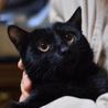 【島根県より】黒猫の男子飼い主さん募集!