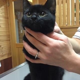 黒猫女の子生後5ヶ月半