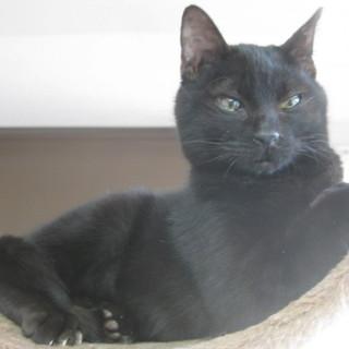 元気いっぱい黒猫ちゃん!