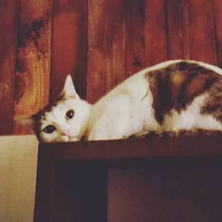 とっても小柄な美猫ちゃんです。