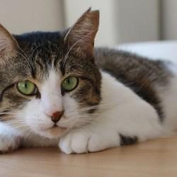 神奈川県動物保護センター登録ボランティア譲渡会