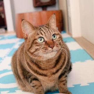 【急募】誰よりも懐っこいまん丸猫ちゃん(キキ)