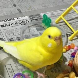 沢山卵を産みます、、、。