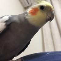 Birdbird