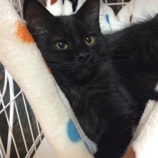 柔らかふわふわな黒猫の女の仔
