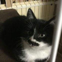 みんにゃの家 保護猫の譲渡会 サムネイル2